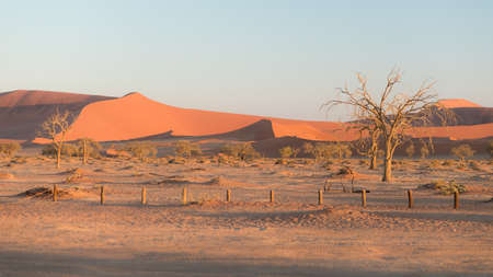 The scenic Sossusvlei and Deadvlei, clay and salt pan with braided Acacia trees surrounded by majestic sand dunes. Namib Naukluft National Park, main visitor attraction and travel destination in Namibia.
