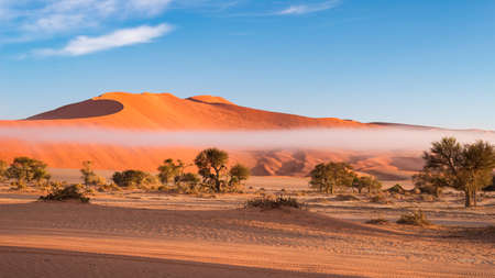 Sand dunes in the Namib desert at dawn, roadtrip in the wonderful Namib Naukluft National Park, travel destination in Namibia, Africa. Morning light, mist and fog.   Stok Fotoğraf
