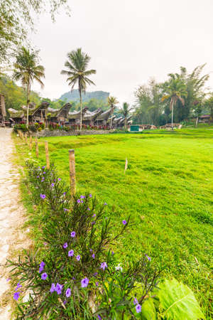 Row of wooden buildings in traditional village with typical boat shaped roofs in Tana Toraja, South Sulawesi, Indonesia. Wide angle shot with flowers and meadow in the foreground. Stock Photo