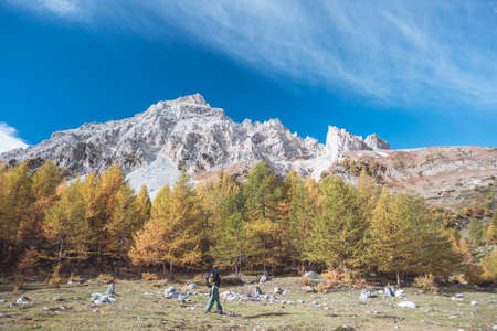 Hiker walking on a colorful valley with great panoramic view and autumnal vivid colors. Wide angle shot in the Italian French Alps. Toned decontrasted image.