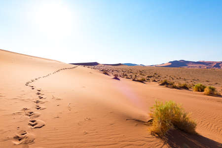Footprints on Sossusvlei Sand Dunes, Namib Naukluft National Park, Namib desert, scenic travel destination in Namibia, Africa.