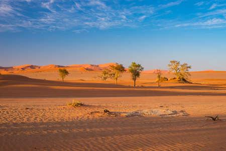 Sossusvlei Namibia, travel destination in Africa. Sand Dunes and clay salt pan with acacia trees, Namib Naukluft National Park, Namib desert.