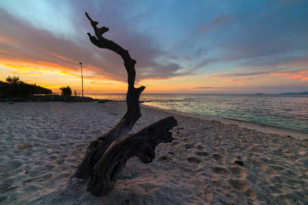 Tropical beach sunset with tree trunk and romantic colorful sky. Wide angle shot, long exposure, blurred motion.