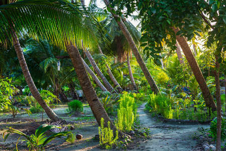 Lush green tropical garden, sunburst in palm tree woodland on desert island, Sumatra, Indonesia. Inspirational nature, romantic light, meditation concept.