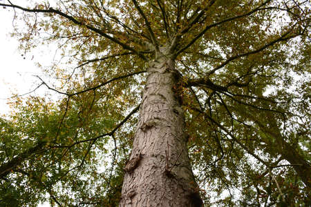 peal: crown of a tree