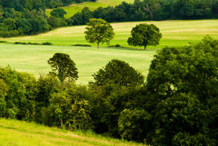 Voir plus de Surrey Hills, Angleterre, Royaume-Uni. Juillet 2008. Newlands Corner est le point central d'une vaste zone de for�ts et de prairies que la craie est tr�s populaire aupr�s des promeneurs et pique-niqueurs. Sentiers m�nent aux villages de Shere, Albury et Chilworth et l'ar