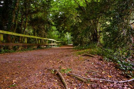 Bois chemin conduisant � la Silent Pool, � Surrey, en Angleterre, Royaume-Uni. Juillet 2008. Banque d'images
