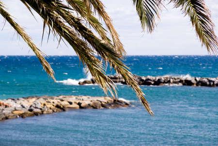 Palm against the italian the sea