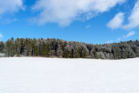 Black forest in Winter, Germany. Copy space.