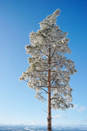 Winter Tree, Germany. Copy space. Stock Photo