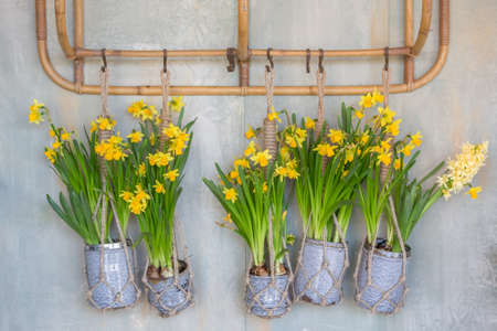 Wall Hanging Vases With Tulips Stock Photo Picture And Royalty Free