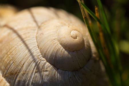 mollusc: Snail shell Stock Photo