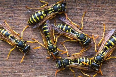 animal nest: Several wasps gathering near their nest