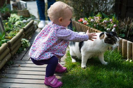 caress: Young blond girl trying to caress a white and black cat Stock Photo