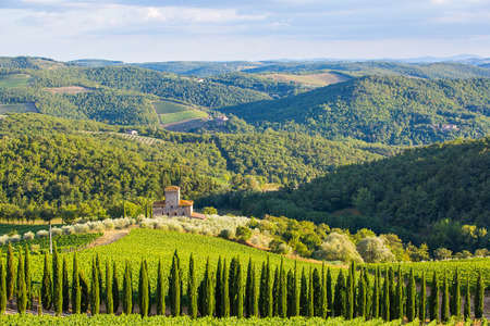 Siena province, Italy - August 6, 2016: Vineyards of the Castello di Albola estate in the Chianti region. Editorial