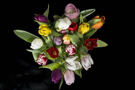 Bouquet of colorful tulips, on black background. Stock Photo