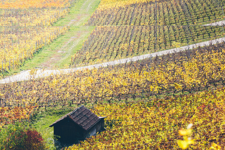 Colorful vineyards in the countryside of the Geneva canton.