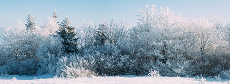 Panoramic view of snow covered trees in winter. Stock Photo