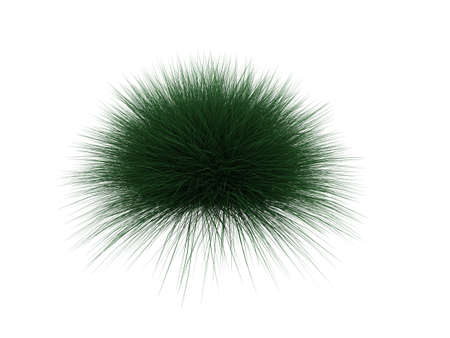 thorn bush: green edgy plant on a white background
