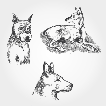 hand drawn Set of dogs Vector