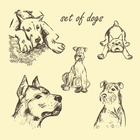 airedale terrier: hand drawn Set of dogs
