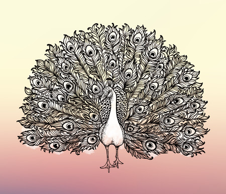 details: Beautiful Handdrawn Peacock bird consist many details. Clip-art illustration.