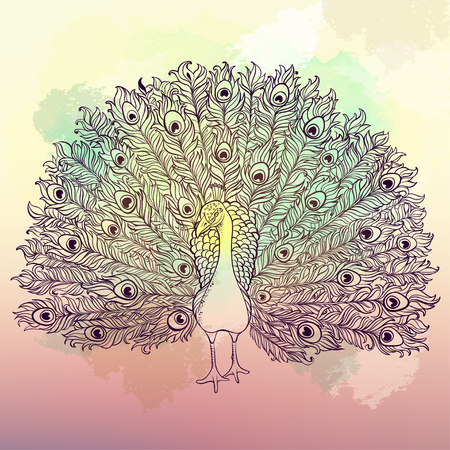 consist: Vector Beautiful Hand drawn Peacock bird consist many details.