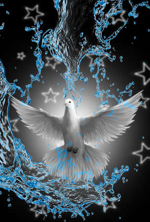 A white dove, peace and freedom concept