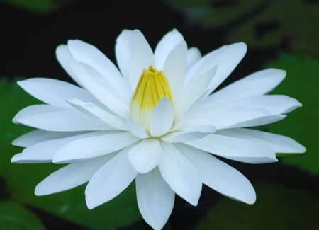 tangible: WATER LILY