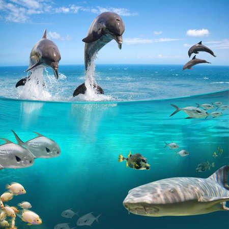 dolphin: MARINE AQUA LIFE