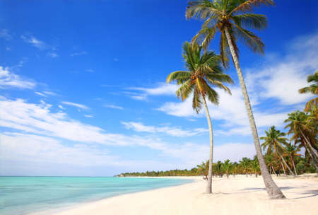 caribe: BEAUTIFUL  WHITE BEACH AND PALMS Stock Photo