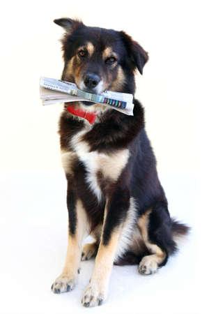 smart dog photo
