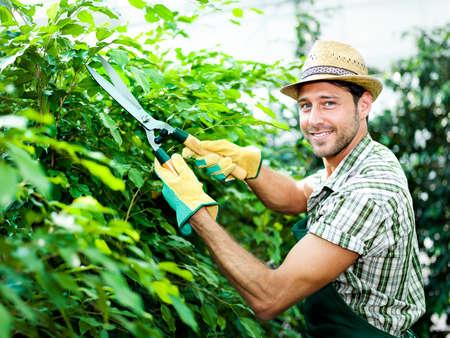 gardening equipment: farmer pruning plants
