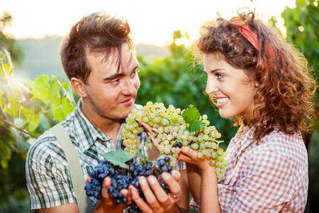 農民は畑でブドウを示す