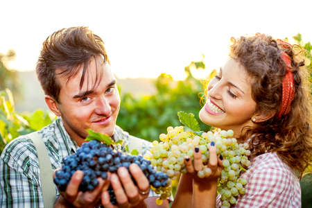 winemaking: farmers showing grapes in a vineyard Stock Photo