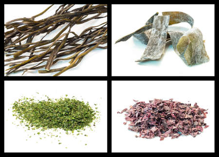 lactuca: Seaweed details: Nemalion helminthoides, kombu, Ulva lactuca and dulse Stock Photo