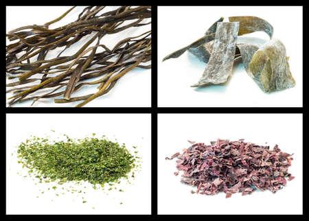 lactuca: Seaweed details: Nemalion helminthoides, kombu, Ulva lactuca and dulse Stock Photo