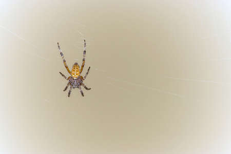 Spider on web on yellow background