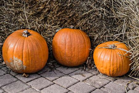 Three pumpkins on straw background