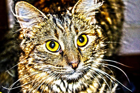 HDR photo of Torti Cat