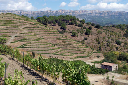 Organic vineyard in Priorat  aka Priorato , near Poboleda, province of Tarragona, Catalonia, Spain