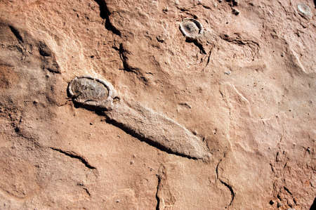 smeared: Fossilized dinosaur eggs   The egg in the foreground broke and smeared prior to fossilization, near Tuba City, Arizona, US Stock Photo