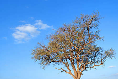 tree and white clouds in blue sky photo