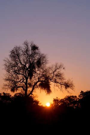 the golden light of an African sunset photo