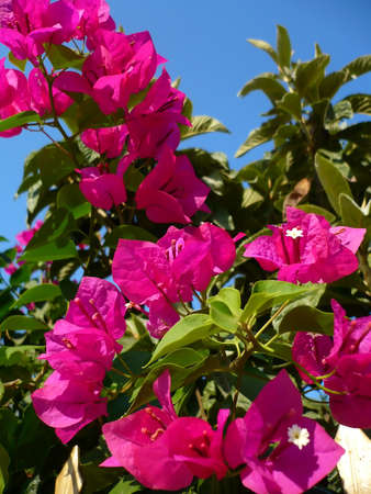 A branch of purple flowers under the sky Stock Photo - 1695003
