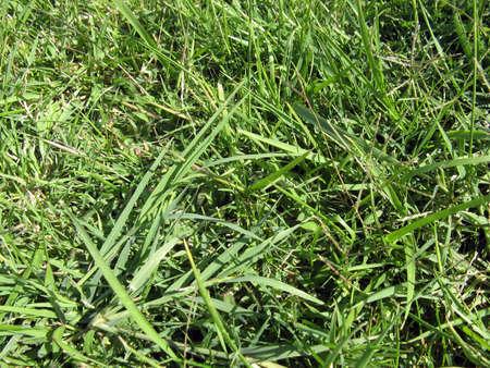 florish: Green grass close up in the park Stock Photo