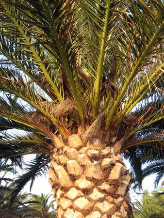 florish: A close up of a green palm tree