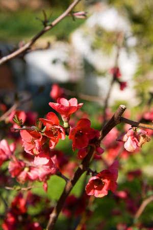 florish: Red small flower close shot in a garden