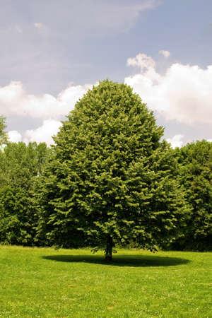blau: Tree