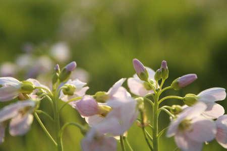knospe: Flowers Stock Photo